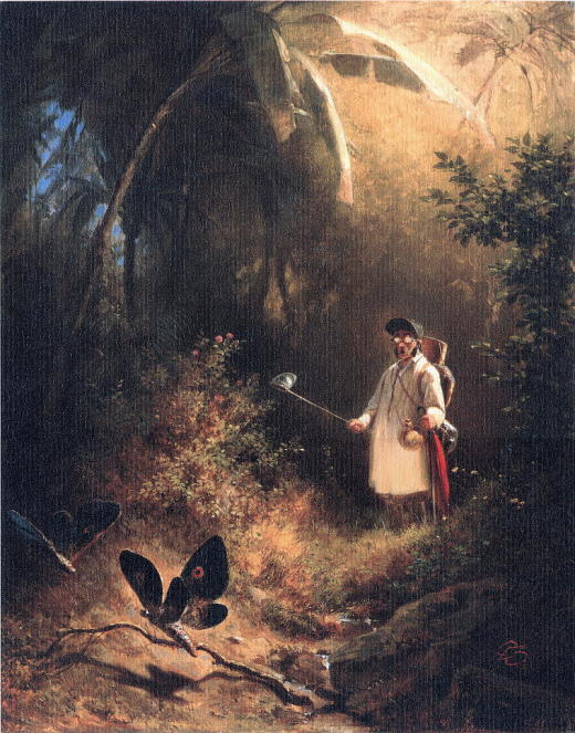 SP-005 Der Schmetterlingsfaenger_RL
