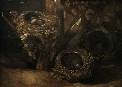 "Vincent van Gogh ""Vogelnester"" 43 x 57 cm"