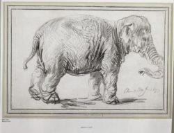 """Rembrandt """"Un-Eléphant""""  230 x 340 cm"""