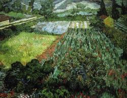 "Vincent van Gogh ""Mohnfeld"" (Feld mit Mohnblumen), 71 x 91 cm"