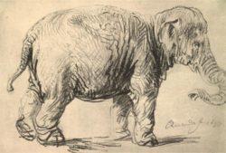 """Rembrandt """"Elephant""""  230 x 340 cm"""