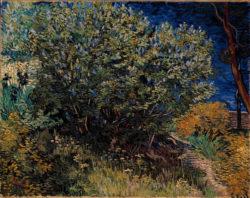 """Vincent van Gogh """"Fliederstrauch"""" 73 x 92 cm"""