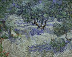 "Vincent van Gogh ""Olivenhain"" 73 x 93 cm"
