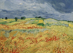 "Vincent van Gogh ""Felder 50 x 65 cm"