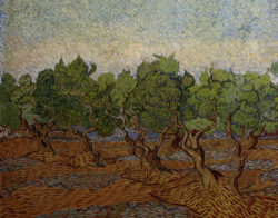 "Vincent van Gogh ""Olivenhain"" 73 x 92 cm"