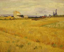 """Vincent van Gogh """"Weizenfeld"""" 50 x 61 cm"""