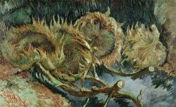 "Vincent van Gogh ""Vier verbluehte Sonnenblumen"", 60 x 100 cm"