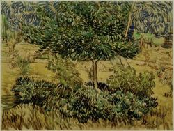 """Vincent van Gogh """"Baum und Straeucher im Garten der Heilanstalt"""" (Garten der Heilanstalt Saint-Paul-de-Mausole in Saint-Rémy-de-Provence) 46,9 x 61,9 cm"""
