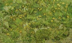 """Vincent van Gogh """"Les pissenlits"""" (Loewenzahn) 35,5 x 57 cm"""