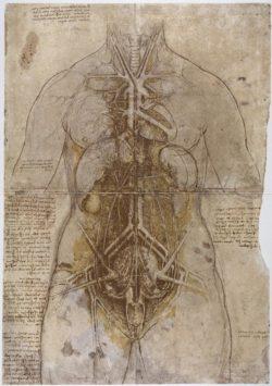 "Leonardo da Vinci ""Anatomiestudie"" 332 x 476 cm"