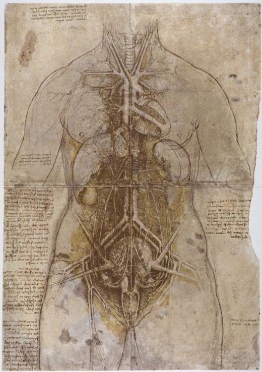 "Leonardo da Vinci ""Anatomiestudie"" 332 x 476 cm 1"
