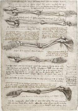 "Leonardo da Vinci ""Anatomiestudie"" 201 x 293 cm"