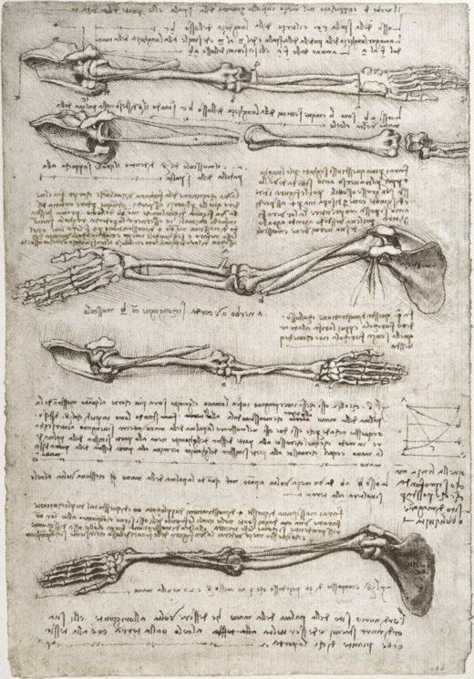 "Leonardo da Vinci ""Anatomiestudie"" 201 x 293 cm 1"