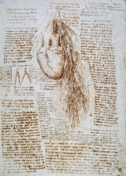 "Leonardo da Vinci ""Anatomiestudie"" 203 x 288 cm"