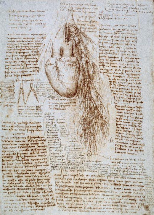 "Leonardo da Vinci ""Anatomiestudie"" 203 x 288 cm 1"