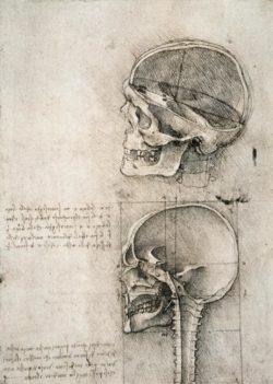 "Leonardo da Vinci ""Anatomiestudie"" 134 x 188 cm"